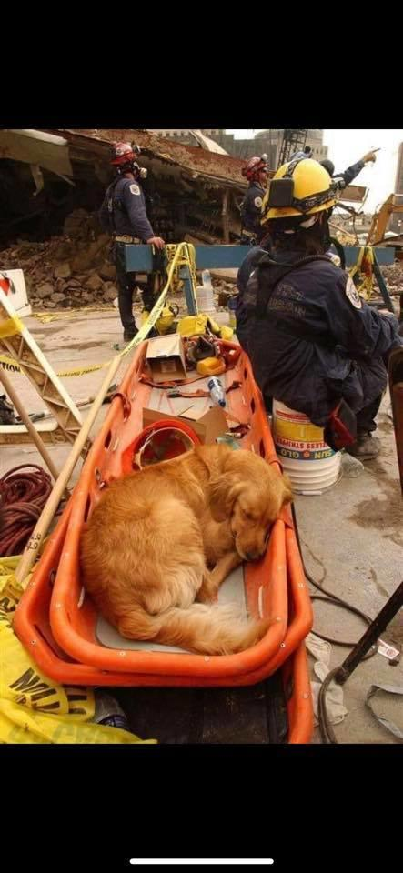 Search and rescue dog napping