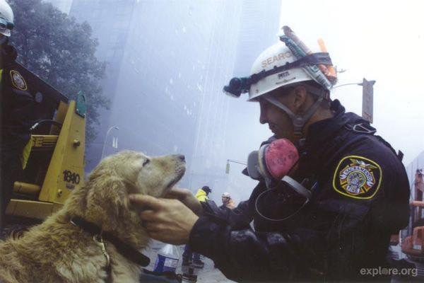 Fireman comforting a search and rescue dog